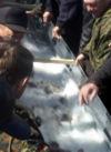 В Каховское водохранилище выпустили 1,5 тонны карпа (видео)