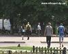 Никополь заслуживает Токаря (видео)