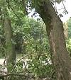 8-летний ребенок упал с 4-метровой высоты