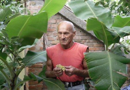Бананы, мандарины и инжир растут в… Никополе