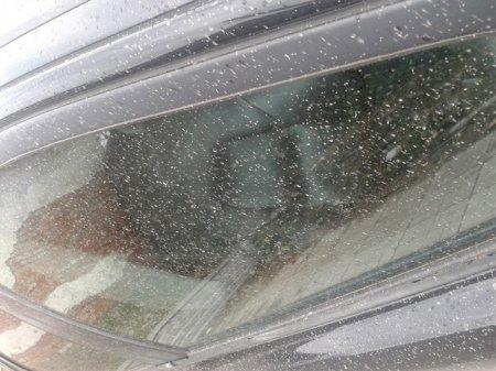 В Никополе идет дождь неизвестной природы (фото)