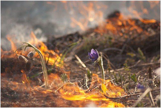 Со страхом ожидаю сезонного выжигания трав на территории угодий