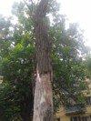 Деревья «говорят»