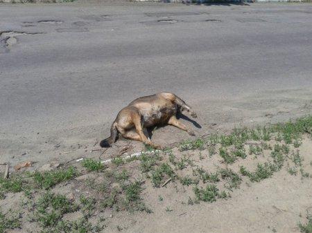 Никополь в воде и в трупах собак