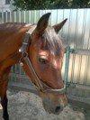 В Никополе планируется приют для обреченных лошадей!!!