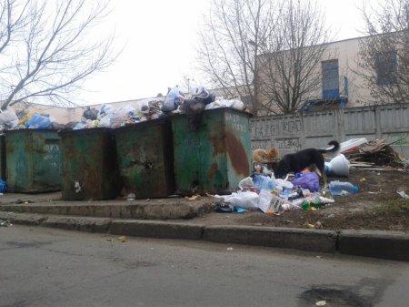 Никополь утопает в мусоре. Повторим вывоз мусора под здание горсовета
